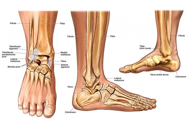 medical-illustration-feet